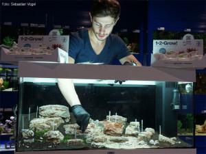 Aquarium einrichten Tipp: Pflanzen mit Pinzette einsetzen