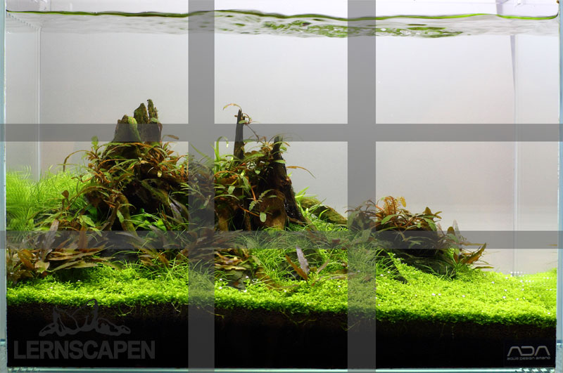 amazing wie viele passen in einen nano cube with nano aquarium einrichten betta aquarium. Black Bedroom Furniture Sets. Home Design Ideas
