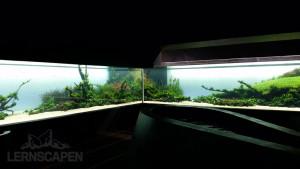 Forests Underwater - Stand 22.04.2015 Bild Filipe Oliveira 2
