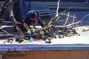 Forests Underwater - 6 Tonnen Sand gleichmäßig verteilt im Vordergrund