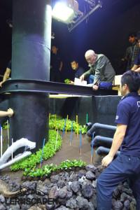 Forests Underwater - Die Erste Ecke wird bepflanzt