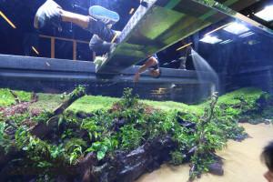 Forests Underwater - Die letzten Feinarbeiten