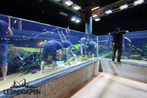 Forests Underwater - Farne und Anubien aufbinden 2