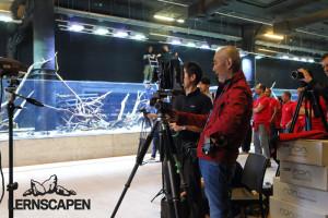 Forests Underwater - Hardscape only Bilder mit der analogen Großbildkamera
