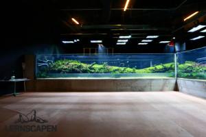 Forests Underwater - Langsam wird das Aquarium mit Wasser gefüllt