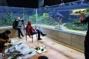 Forests Underwater - Takashi Amano kontrolliert die letzten Details