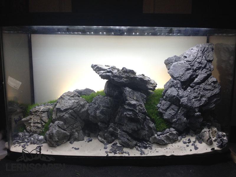 Aquascaping-Wettbewerb-Das-fertige-Layout-nach-dem-Bepflanzen-mit-Eleocharis-mini-von-Tropica