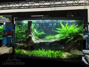 Aquascaping-Wettbewerb-HannoverScape2016-IMG_1073