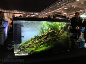 Aquascaping-Wettbewerb-HannoverScape2016-IMG_1077