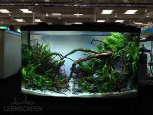 Aquascaping-Wettbewerb-HannoverScape2016-IMG_1080