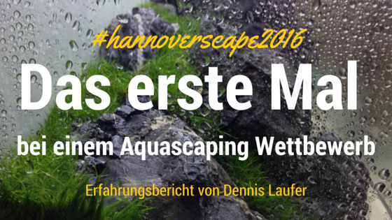 Aquascaping Wettbewerb das erste Mal